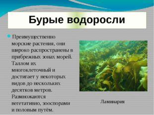 Бурые водоросли Преимущественно морские растения, они широко распространены в