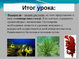 Итог урока: Водоросли – низшие растения, их тело представлено в виде слоевища