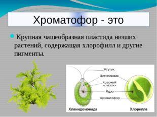 Хроматофор - это Крупная чашеобразная пластида низших растений, содержащая хл