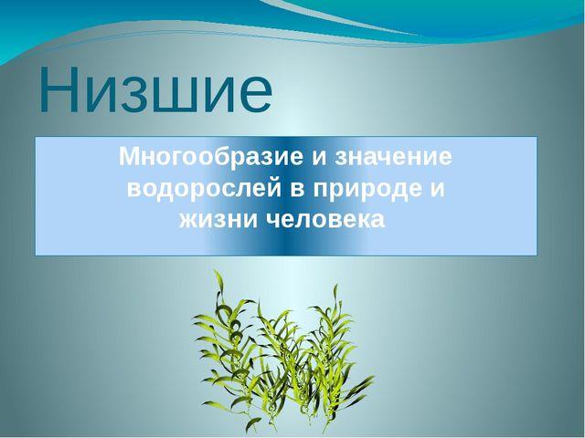 Низшие растения Многообразие и значение водорослей в природе и жизни человека