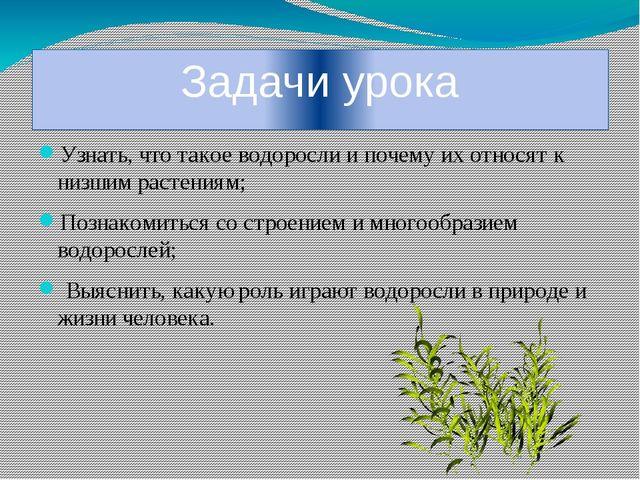 Задачи урока Узнать, что такое водоросли и почему их относят к низшим растени...