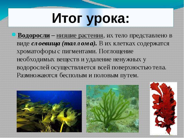 Итог урока: Водоросли – низшие растения, их тело представлено в виде слоевища...