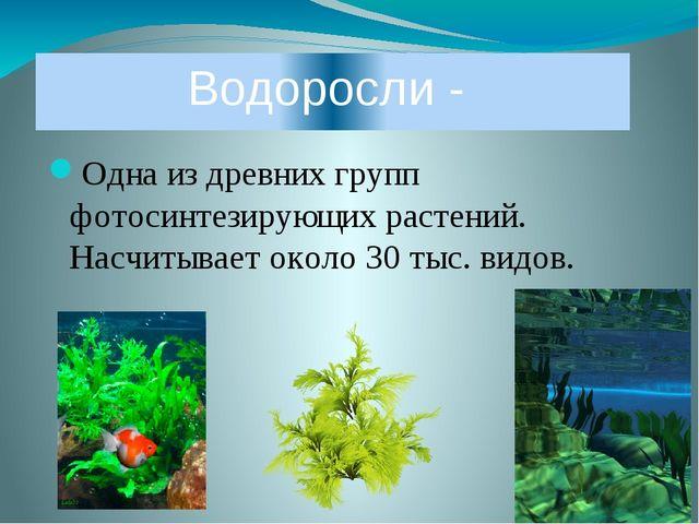 Одна из древних групп фотосинтезирующих растений. Насчитывает около 30 тыс. в...