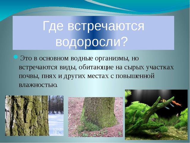 Где встречаются водоросли? Это в основном водные организмы, но встречаются ви...