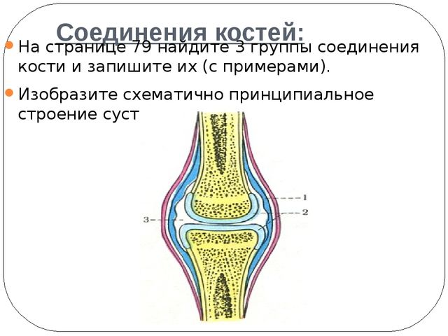 Соединения костей: На странице 79 найдите 3 группы соединения кости и запиши...