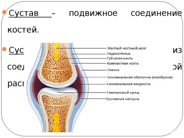 Сустав – подвижное соединение костей. Суставная сумка – структура из соединит...