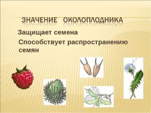 Защищает семена Способствует распространению семян