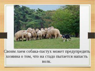 Информационные источники: http://www.metod-kopilka.ru http://festival.1septem
