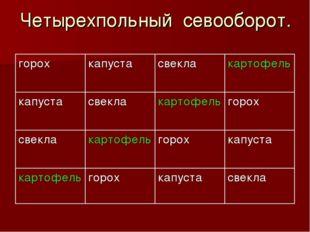 Четырехпольный севооборот. горохкапустасвеклакартофель капустасвеклакарт