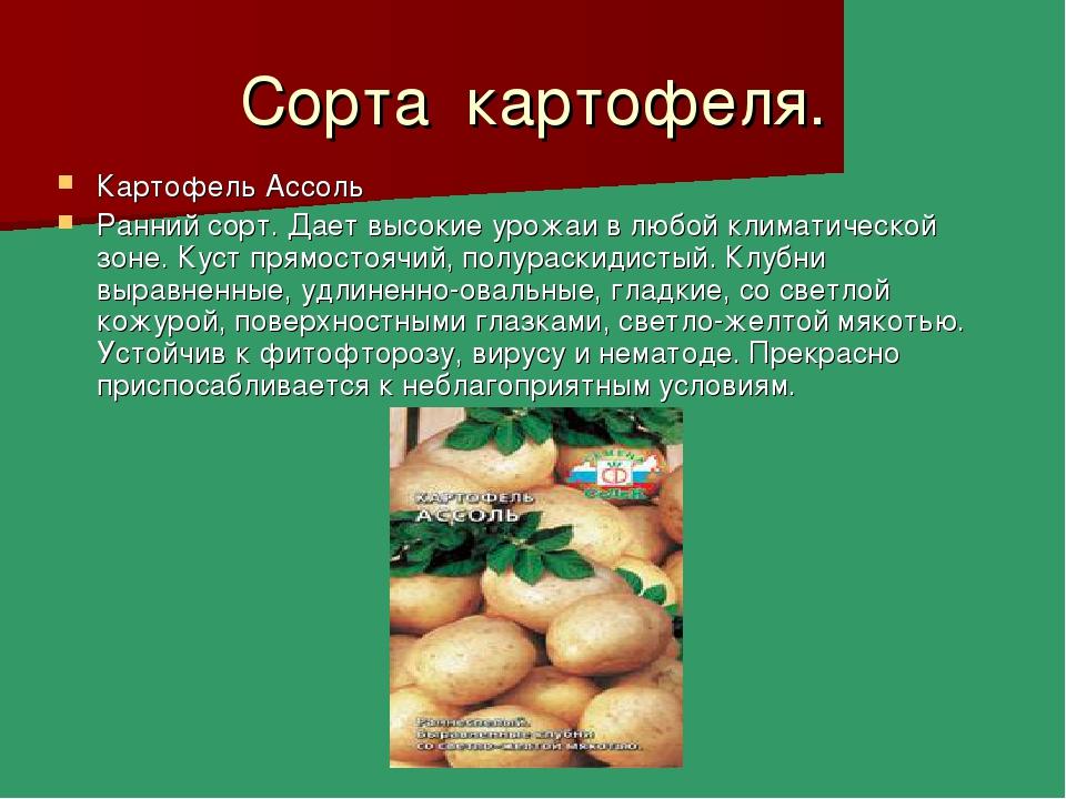 Сорта картофеля. Картофель Ассоль Ранний сорт. Дает высокие урожаи в любой кл...