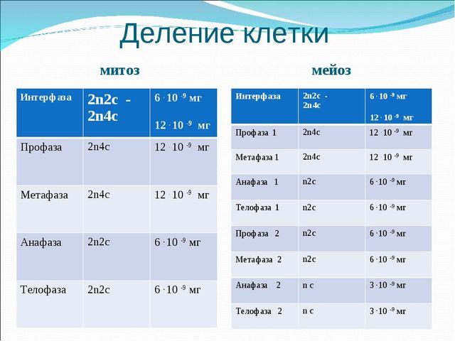 Деление клетки митоз мейоз Интерфаза 2n2c - 2n4c6 . 10 -9 мг 12 . 10 -9 мг...
