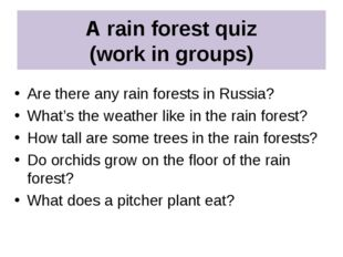 A rain forest quiz (work in groups) Are there any rain forests in Russia? Wha