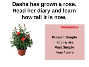 Dasha has grown a rose. Read her diary and learn how tall it is now. Remember