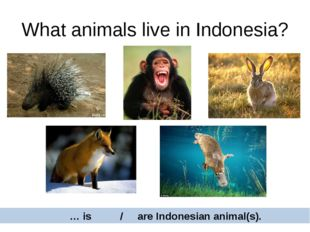 What animals live in Indonesia? … is / are Indonesian animal(s).