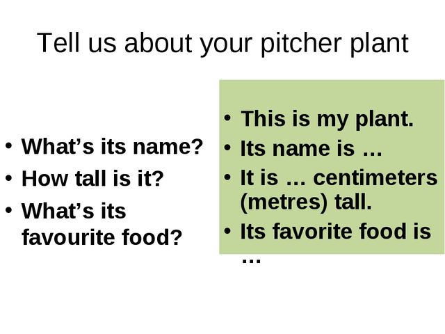 Tell us about your pitcher plant What's its name? How tall is it? What's its...