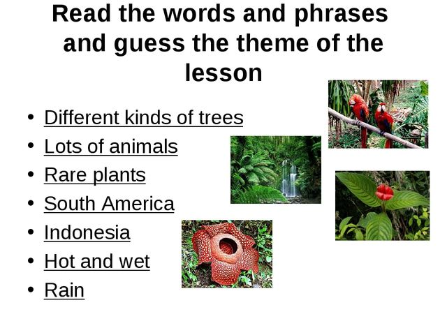 Read the words and phrases and guess the theme of the lesson Different kinds...