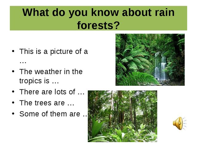 What do you know about rain forests? This is a picture of a … The weather in...