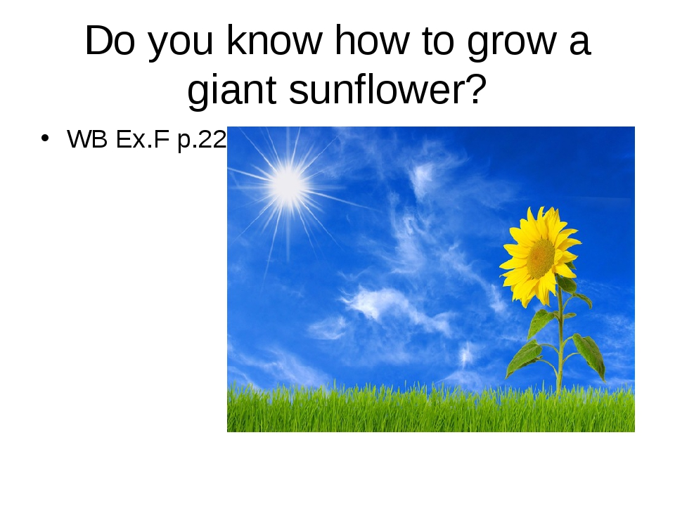 Do you know how to grow a giant sunflower? WB Ex.F p.22