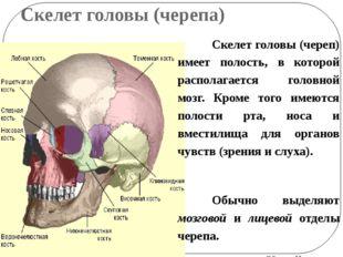 Скелет головы (черепа) Скелет головы (череп) имеет полость, в которой распола