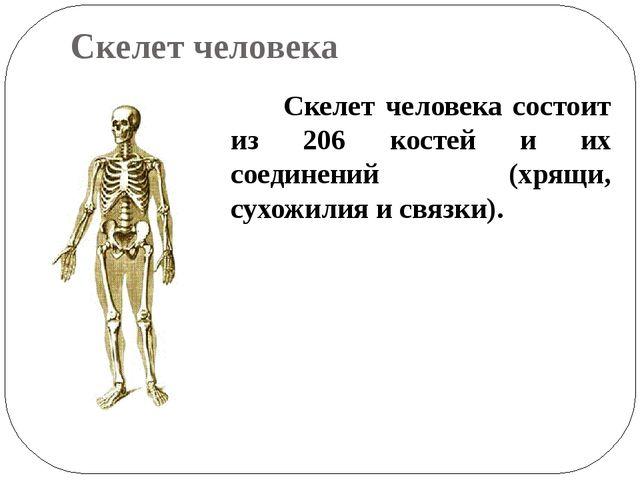 Биология кроссворд кости скелета 8 класс