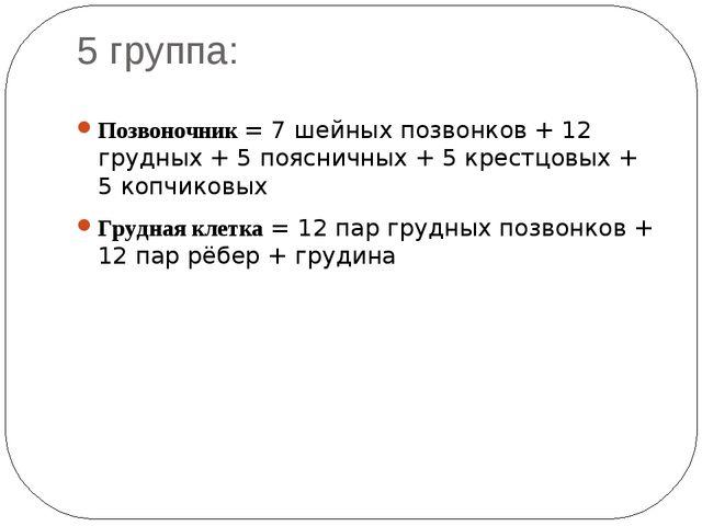 5 группа: Позвоночник = 7 шейных позвонков + 12 грудных + 5 поясничных + 5 кр...