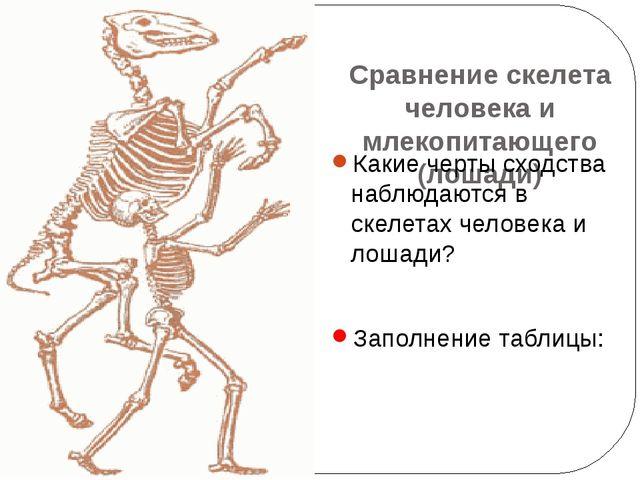 Сравнение скелета человека и млекопитающего (лошади) Какие черты сходства наб...