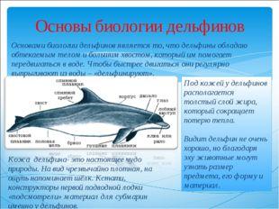 Основы биологии дельфинов Основами биологии дельфинов является то, что дельфи
