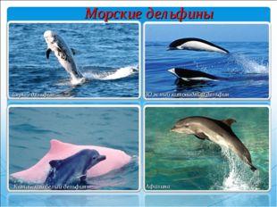 Серый дельфин Южный китовидный дельфин Китайский белый дельфин Афалина Морски