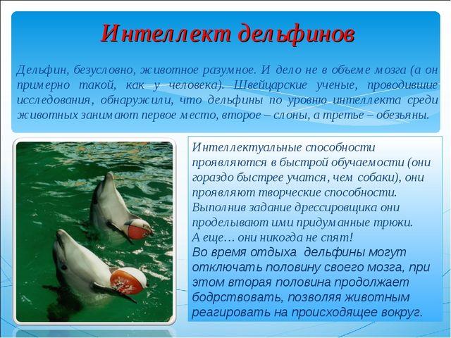 Интеллект дельфинов Дельфин, безусловно, животное разумное. И дело не в объем...