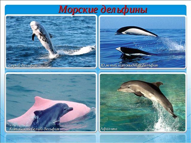 Серый дельфин Южный китовидный дельфин Китайский белый дельфин Афалина Морски...
