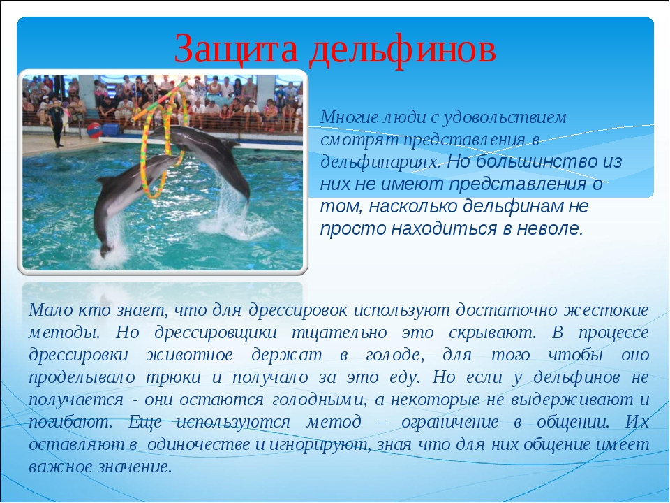 Защита дельфинов Многие люди с удовольствием смотрят представления в дельфина...
