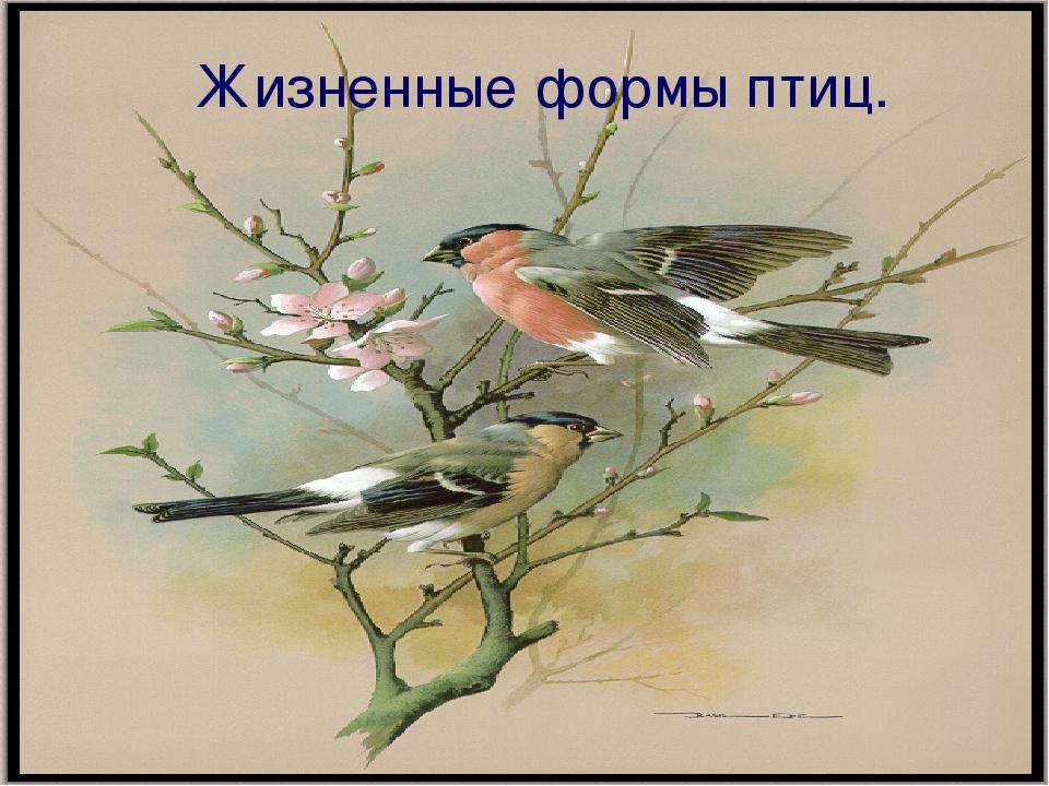 Жизненные формы птиц.