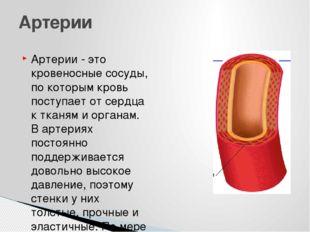 Артерии - это кровеносные сосуды, по которым кровь поступает от сердца к ткан