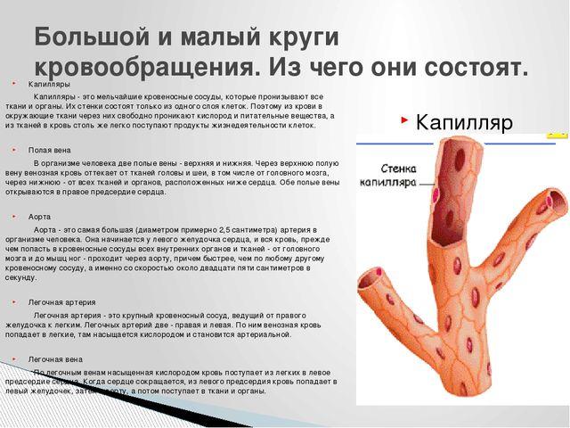 Капилляры Капилляры - это мельчайшие кровеносные сосуды, которые пронизывают...