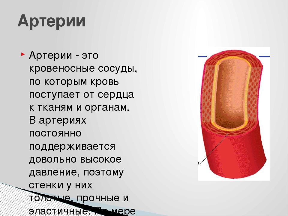 Артерии - это кровеносные сосуды, по которым кровь поступает от сердца к ткан...