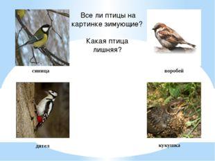 кукушка дятел синица воробей Все ли птицы на картинке зимующие? Какая птица л