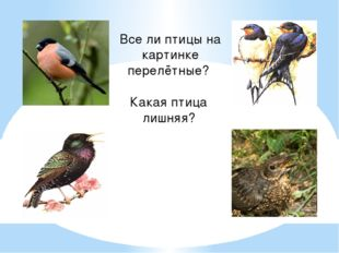 Все ли птицы на картинке перелётные? Какая птица лишняя?