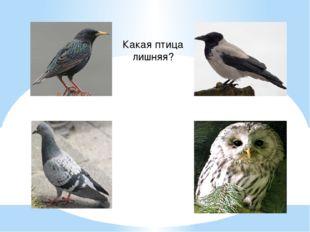 Какая птица лишняя?
