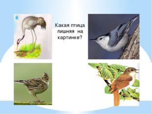 Какая птица лишняя на картинке?