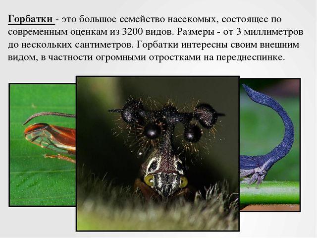 Горбатки - это большое семейство насекомых, состоящее по современным оценкам...