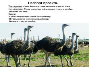 Паспорт проекта. Тема проекта: Самая большая и самая маленькая птицы на Земл