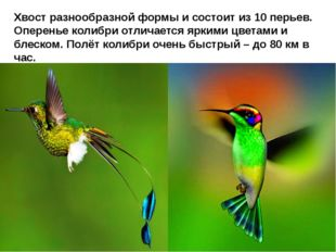 Хвост разнообразной формы и состоит из 10 перьев. Оперенье колибри отличаетс