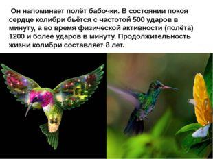 Он напоминает полёт бабочки. В состоянии покоя сердце колибри бьётся с часто