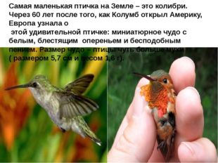 Самая маленькая птичка на Земле – это колибри. Через 60 лет после того, как
