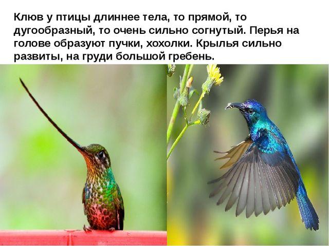 Клюв у птицы длиннее тела, то прямой, то дугообразный, то очень сильно согну...