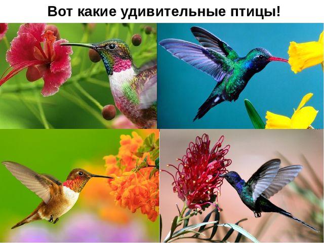 Вот какие удивительные птицы!