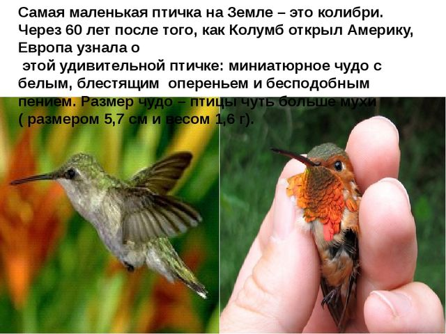 Самая маленькая птичка на Земле – это колибри. Через 60 лет после того, как...