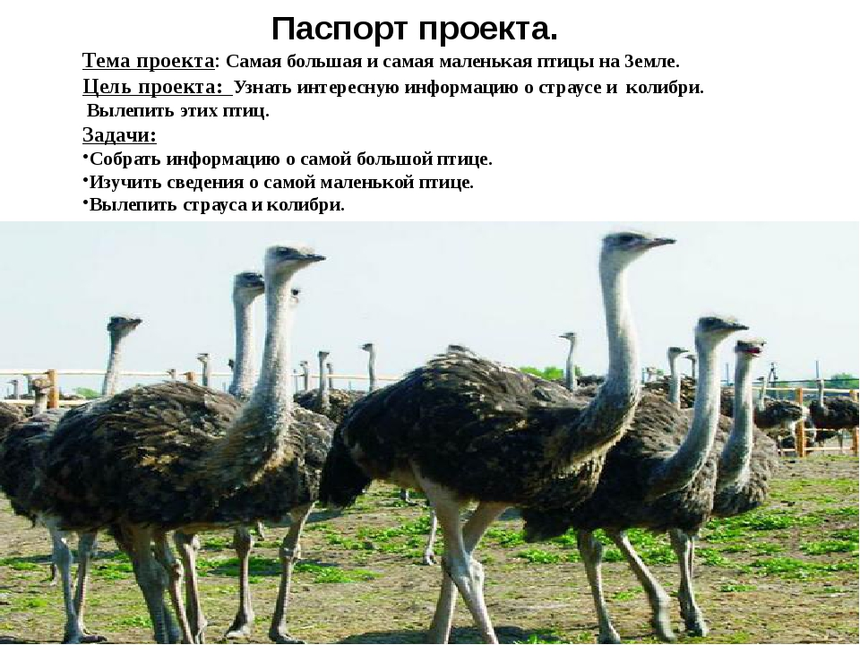 Паспорт проекта. Тема проекта: Самая большая и самая маленькая птицы на Земл...