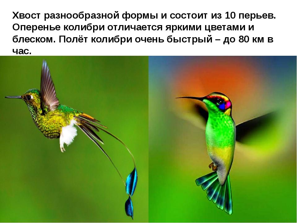 Хвост разнообразной формы и состоит из 10 перьев. Оперенье колибри отличаетс...