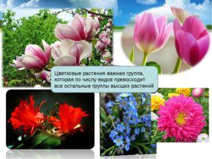 Цветковые растения важная группа, которая по числу видов превосходит все оста